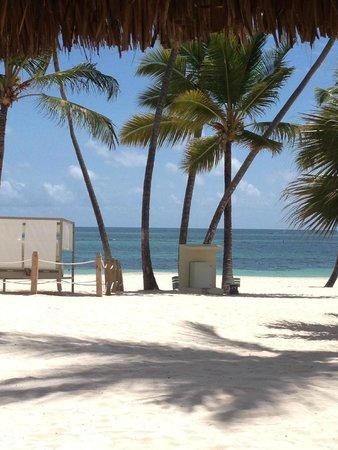 Meliá Caribe Tropical: Beautiful grounds.
