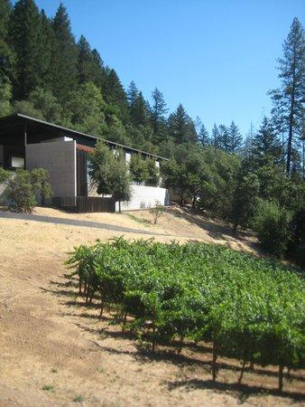 CADE Winery: Cade