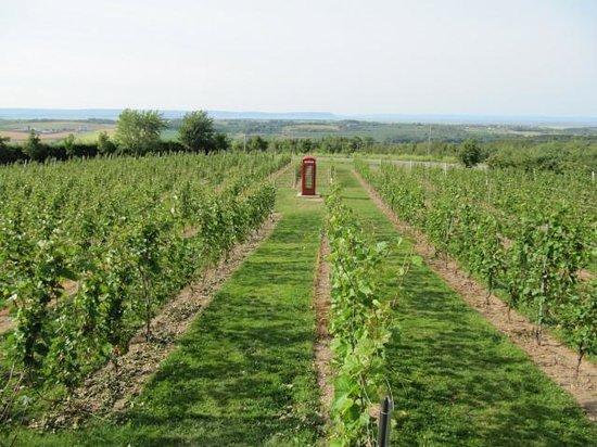 Luckett Vineyards calling!