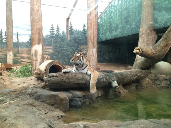 Milwaukee County Zoo: Resting