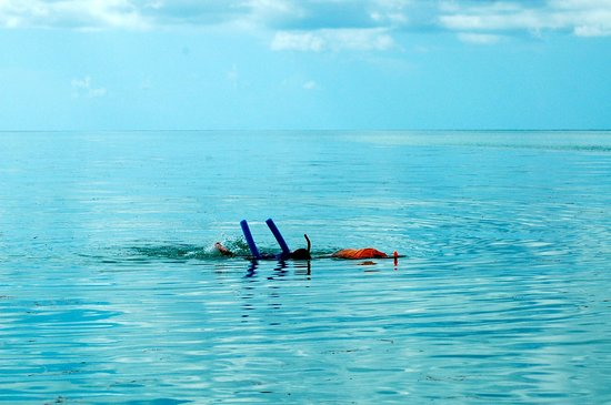 Easy Day Charters : snorkeling in the most amazing place