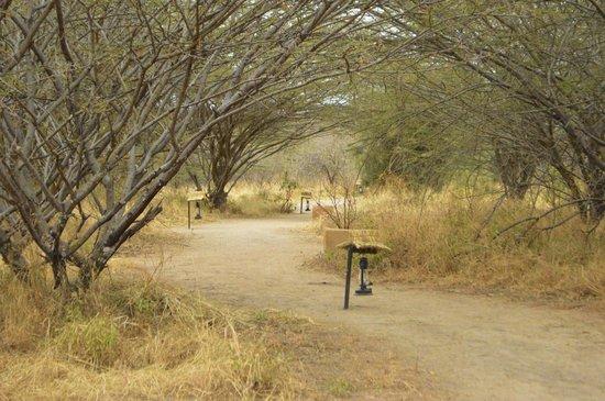 Kirurumu Tarangire Lodge : Camino al restaurante