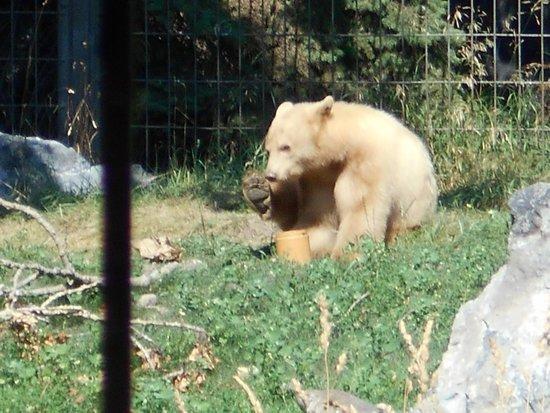 The Calgary Zoo: black bear