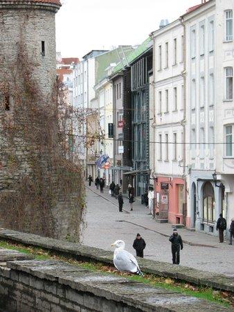 Viru Square: Вирусские ворота