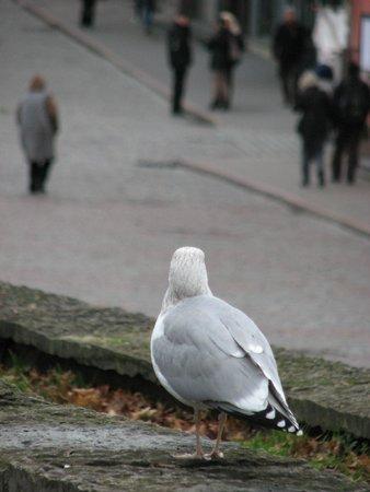 Viru Square: чайка на площади Виру