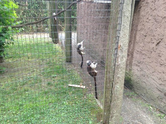 Cape May County Park & Zoo: Small Monkeys