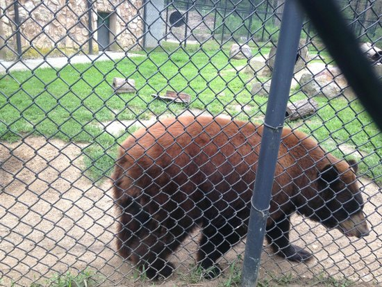 Cape May County Park & Zoo: Brown Bear-no zoom on camera-they're that close!