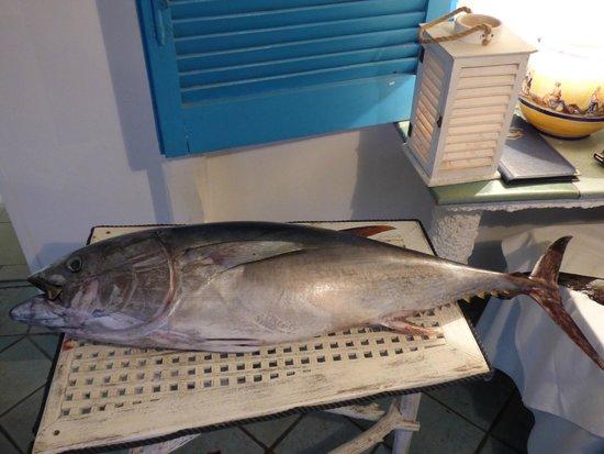 Ristorante L'Isola del Pescatore: L'arrivo del pesce fresco: tonno,pesce spada e pesce nastro!!!!