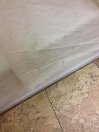 Hampton Inn Portsmouth Central: Moldy shower curtain