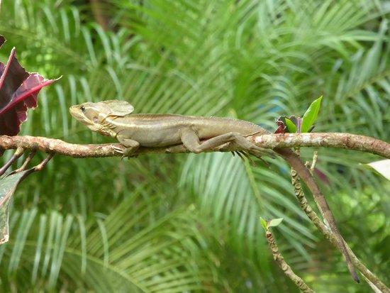 Mawamba Lodge: lizard on the grounds