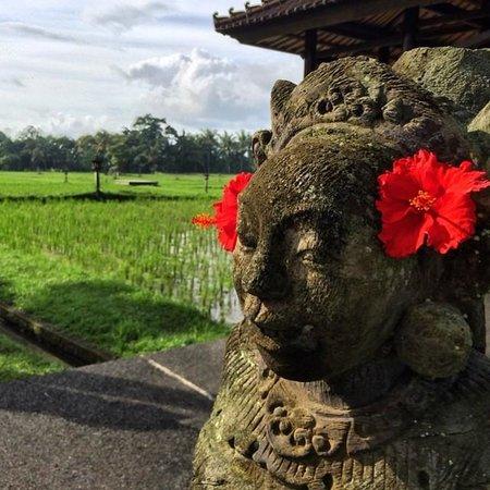 The Chedi Club Tanah Gajah, Ubud, Bali – a GHM hotel: rice fields