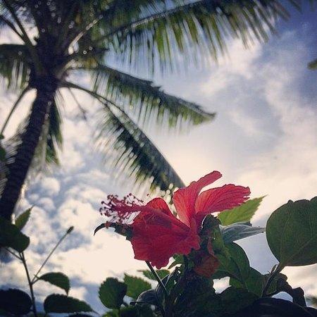 The Chedi Club Tanah Gajah, Ubud, Bali – a GHM hotel: botanics