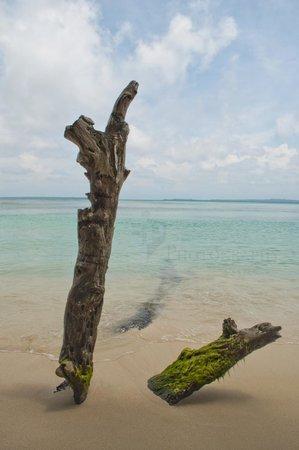 Eclypse de Mar: Tropical Tree