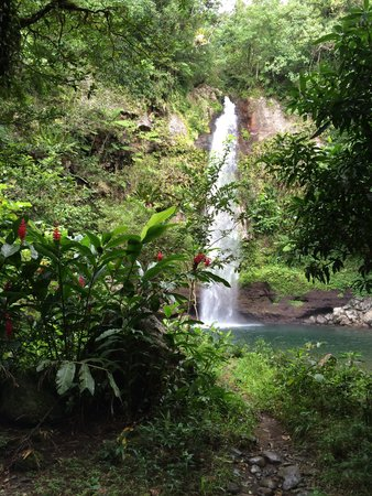 Paradise Taveuni: Swim in a waterfall pool