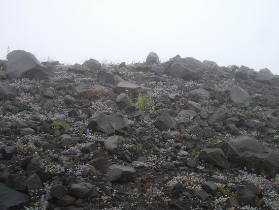 Johnston Ridge Observatory: Rocks blasted from the 1980 eruption