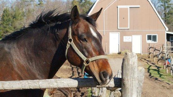 Wildwood Manor Ranch: Another random headshot