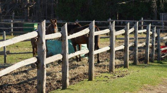 Wildwood Manor Ranch: HORSES
