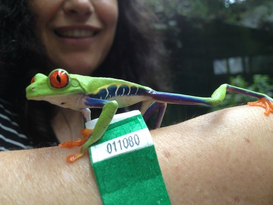 Arenal Eco Zoo: Close encounters of the froggy kind