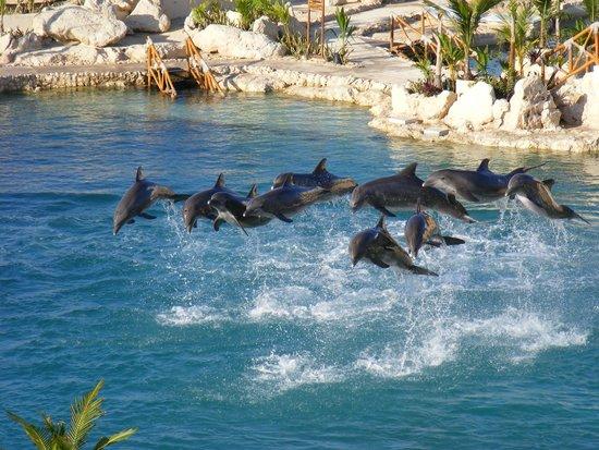 Dolphinaris Cozumel: golfinhos apresentando