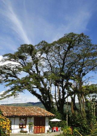 Hacienda Guayabal: The grounds