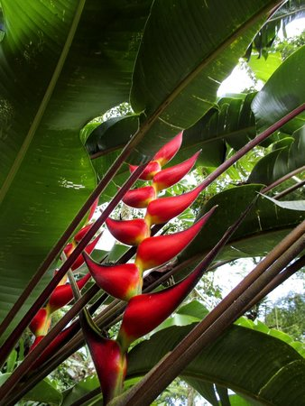 Hacienda Guayabal: Coffee tour