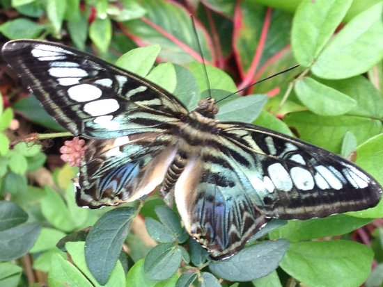 Key West Butterfly and Nature Conservatory: Amazing