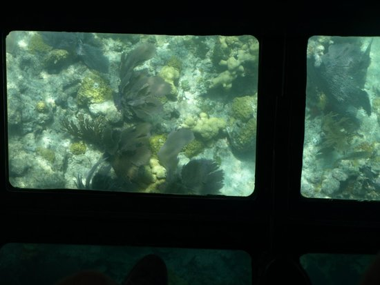 Glass Bottom Boat Discovery Tour: The view you *can* enjoy, if you get the right spot.