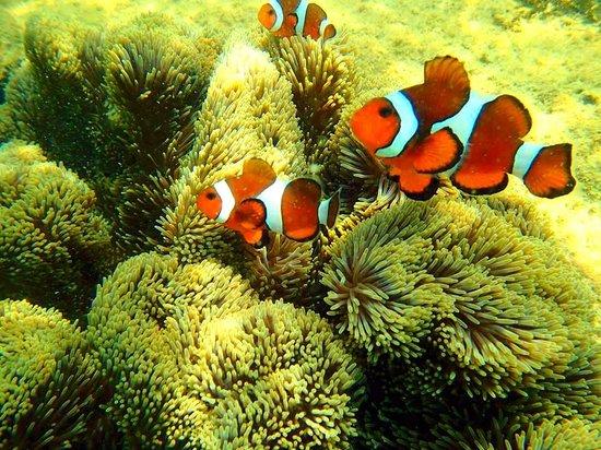 Rimba Resort: Nemo, snorkeling