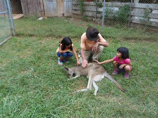 Kentucky Down Under Adventure Zoo: Petting a Momma Kangaroo