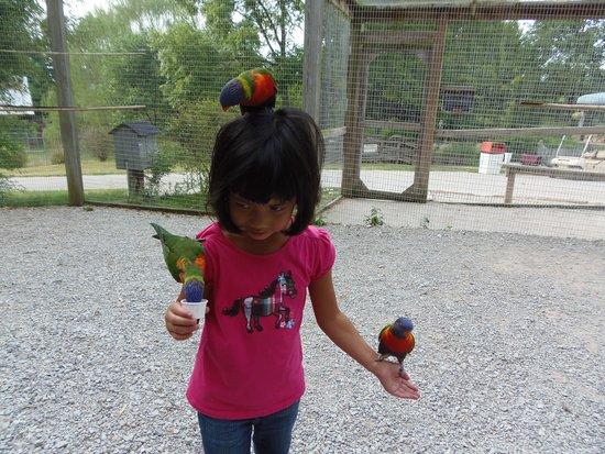 Kentucky Down Under Adventure Zoo: Feeding the Lorikeets