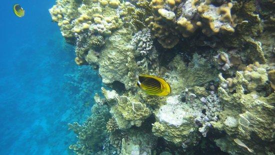 Otium Hotel Aloha: Корал у отеля