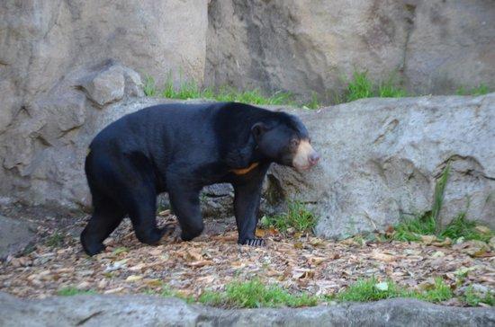 Taronga Zoo: Bear