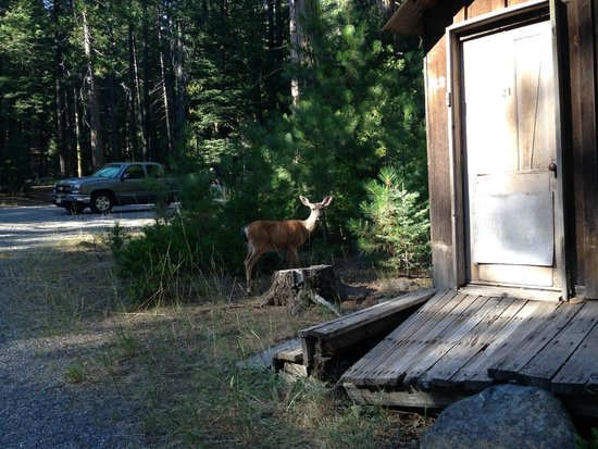 Mill Creek Resort: Deer wander through the property