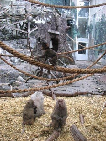 Musée de plein air de Skansen : Skansen - closeup with baboons