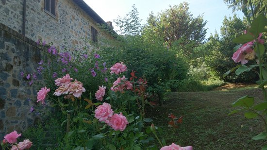 Villa Acquafredda: nice garden all around