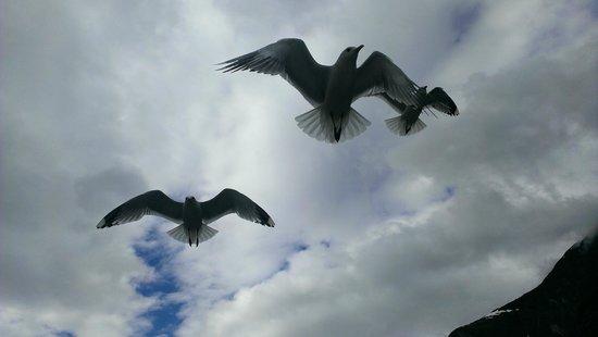 World Heritage Cruise Naeroyfjord: Фьорды. Вечно голодные чайки.