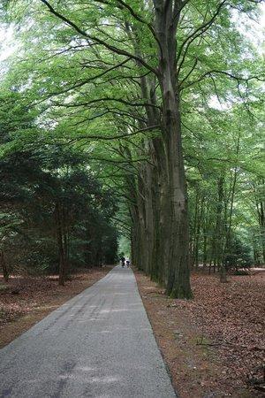 De Hoge Veluwe National Park: De Hoge Veluwe