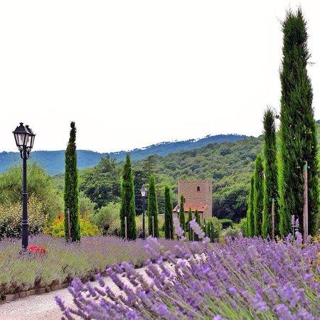 Villa Baroncino: Another drive shot!