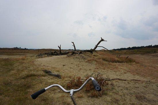 De Hoge Veluwe National Park: Sand Dune