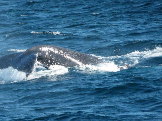 Tallship Island Adventures: Whale watching