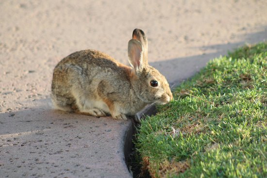 The Landing Grill & Sushi Bar : Bunnies Abound