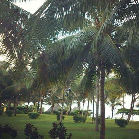 Melia Zanzibar: Gardens