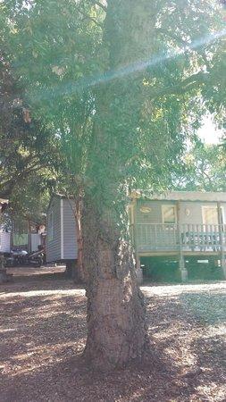 Camping La Vetta : mobil home devant magnifique chene liege