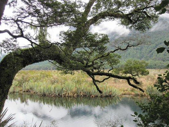 Mirror Lakes Walk : Mirror Lake