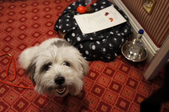The Rubens at the Palace : George enjoying his complimentary treats