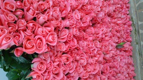 TTC Hotel Premium - Ngoc Lan: dalat roses