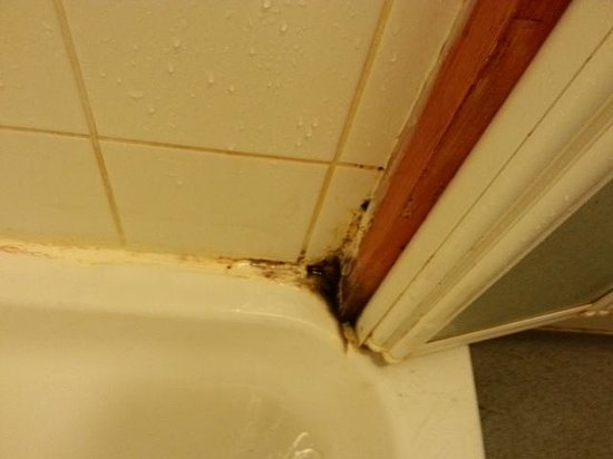Lyons St Mary's Holiday Park: more mould