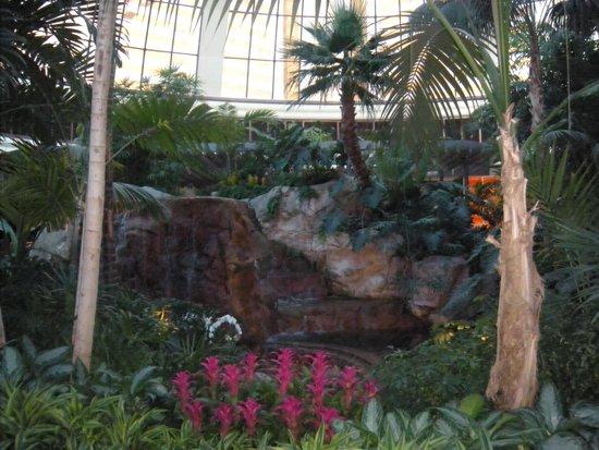 The Mirage Hotel & Casino : de la fraicheur  super l