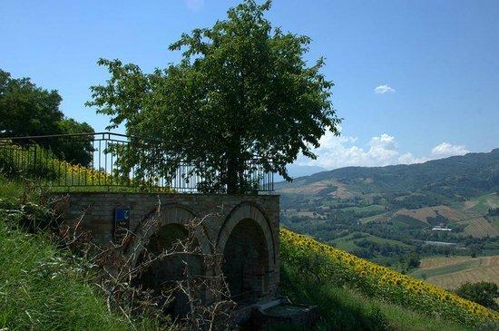 Montedinove, Italia: Fonte Farfense del Sambuco
