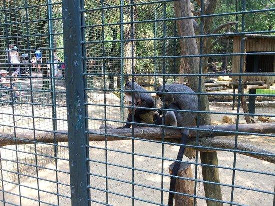 Zoo de la Palmyre : Zoo La Palmyre